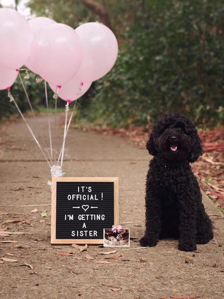 dog-pregnancy-announcement-everymom-1 - The Everygirl