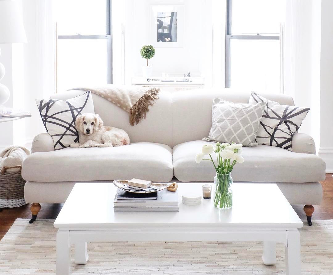 The Best Pet Friendly Sofas Every