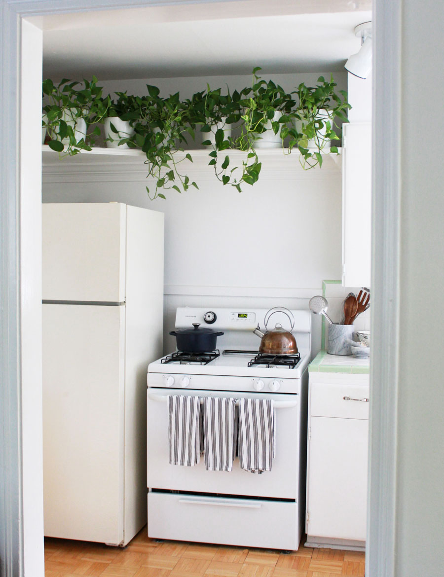 Why I Styled My 800 Sq Ft Apartment With 60 Plants The Everygirl